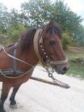 Häst för dagligt lantgårdarbete royaltyfria foton