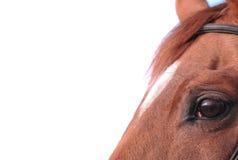 häst för designelementöga Fotografering för Bildbyråer