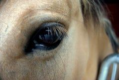 häst för designelementöga Arkivbilder