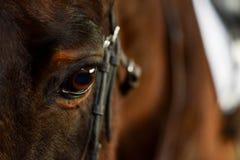 häst för designelementöga arkivfoton