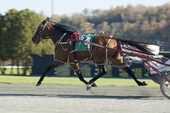 häst för flyga 2 royaltyfri fotografi
