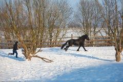 Häst för frisian för mandressyrsvart arkivbild