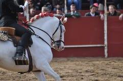 Häst för tjurstridighet Royaltyfri Bild
