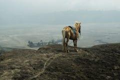 Häst framme av berg nära Volcano Bromo Fotografering för Bildbyråer