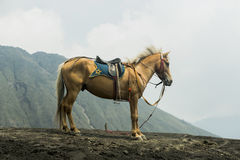 Häst framme av berg nära Volcano Bromo Arkivbilder