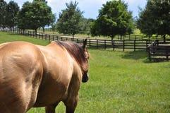 Häst- gå Royaltyfria Foton