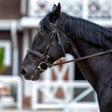 Häst Härlig djur närbild utomhus Arkivbild