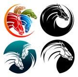 Häst hästar i cirklar Arkivfoto