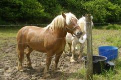 Häst i ängen Royaltyfri Bild