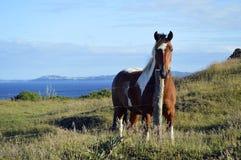 Häst i ancud royaltyfri bild