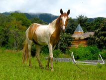 Häst i berg Arkivbild