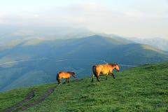 Häst i berg Arkivfoton