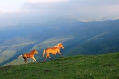 Häst i berg Royaltyfri Foto