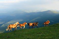 Häst i berg Royaltyfria Bilder