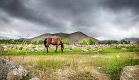 Häst i bergen Royaltyfri Fotografi
