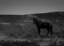 Häst i bergen Fotografering för Bildbyråer