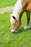 Häst i beta Arkivfoton