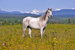 Häst i blommaäng fotografering för bildbyråer