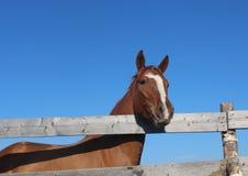 Häst i byn Royaltyfri Bild
