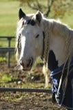 Häst i Como bygd i höst arkivfoto