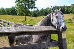 Häst i corral royaltyfri foto