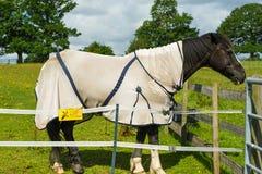 Häst i corral Royaltyfria Foton