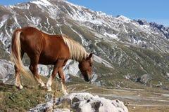 Häst i den fria naturen, Abruzzo, Italien Royaltyfri Fotografi