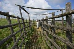 Häst i den romerska bygden Fotografering för Bildbyråer