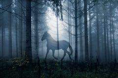 Häst i det mörka skoglandskapet för fantasi royaltyfri fotografi