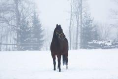 Häst i dimma royaltyfri bild