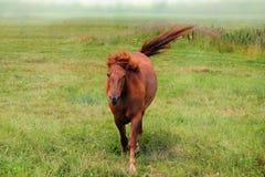 Häst i dimman arkivfoton