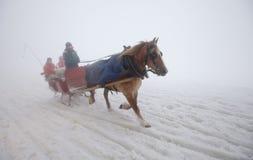 Häst i dimman Arkivbild