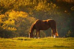 Häst i en äng Royaltyfri Fotografi