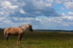 Häst i en äng Fotografering för Bildbyråer