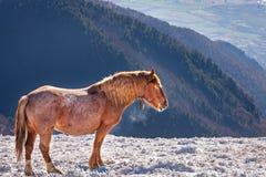 Häst i en kall vinter Arkivfoton