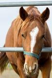 Häst i en lantgård Arkivfoton