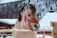 Häst i en lantgård nära den Norge gränsen arkivbild