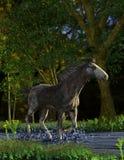 Häst i en liten vik royaltyfri bild