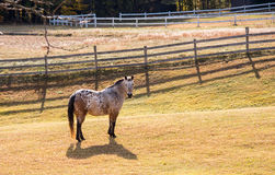 Häst i en sätta in Arkivfoto