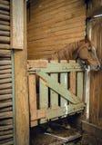 Häst i en stall royaltyfri fotografi
