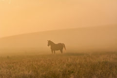 Häst i ett dimmigt fält Arkivbild