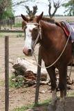 Häst i ett lag som väntar på ägaren. Arkivfoto