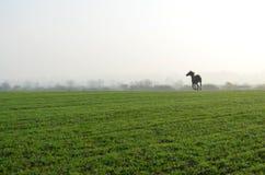 Häst i fältet Arkivfoto