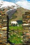 Häst i fältet i den Ushguli byn, Svaneti, Georgia, Royaltyfri Bild