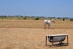Häst i fältet med badet Arkivfoto