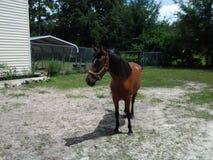 Häst i gården Arkivbilder