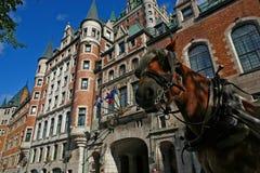 Häst i gamla Quebec City Arkivfoto