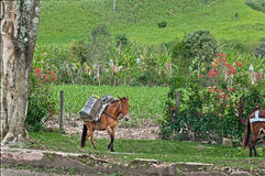 Häst i gräsplan Arkivfoton