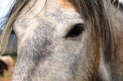 Häst i Guadalupe Valley Royaltyfri Fotografi