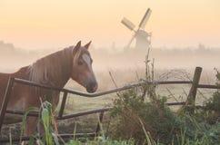 Häst i Holland Arkivfoto
